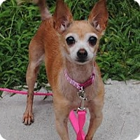 Adopt A Pet :: Momma Chi - west berlin, NJ