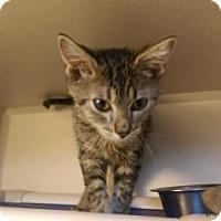 Adopt A Pet :: Grainger - Fort Collins, CO
