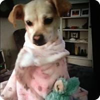 Adopt A Pet :: Paylee pending adoption - Palm Bay, FL