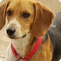 Adopt A Pet :: Hutch - Oxford, MS