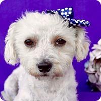 Adopt A Pet :: Gina - Irvine, CA