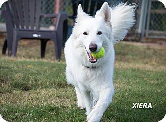 German Shepherd Dog Dog for adoption in Patterson, California - Xiera