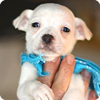 Adopt A Pet :: Mack - West Grove, PA