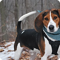 Adopt A Pet :: Buddy - New Castle, PA
