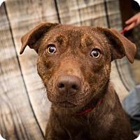 Mixed Breed (Medium) Mix Dog for adoption in Waterbury, Connecticut - Bindi