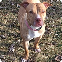 Adopt A Pet :: Mariah - Warrenville, IL
