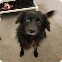 Adopt A Pet :: Watson - Delaware, OH