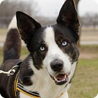 Adopt A Pet :: Kane - Greenwood, SC
