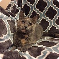Adopt A Pet :: Nola - Addison, IL