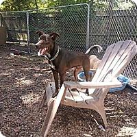 Adopt A Pet :: Drake - New orleans, LA