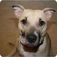 Adopt A Pet :: Rosey - Reisterstown, MD