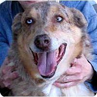 Adopt A Pet :: Lance - Scottsdale, AZ