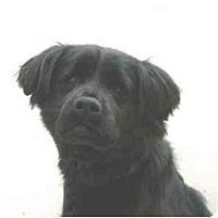 Adopt A Pet :: Teddy - Port Washington, NY