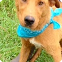 Adopt A Pet :: DAN the MAN - Leland, MS