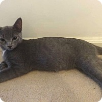 Adopt A Pet :: Grayson -Adoption Pending! - Colmar, PA