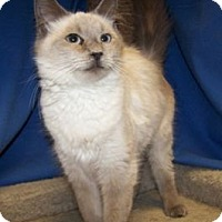 Adopt A Pet :: Elle - Colorado Springs, CO