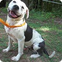 Adopt A Pet :: Larry - Midlothian, VA