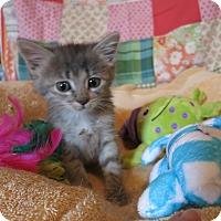 Adopt A Pet :: Kenai - Geneseo, IL