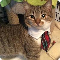 Adopt A Pet :: PK - Mt Pleasant, PA