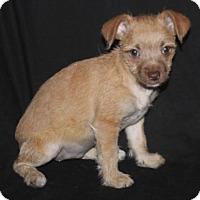 Adopt A Pet :: Jelly Bean: Orange - Palo Alto, CA