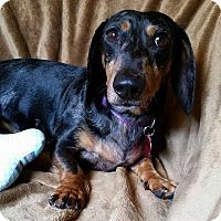 Adopt A Pet :: Milo Montgomery - Urbana, OH