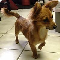 Adopt A Pet :: I'M ADOPTDMango & Kiwi