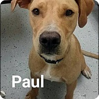 Adopt A Pet :: Paul - Ottumwa, IA