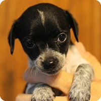 Adopt A Pet :: Flittle - Holly Springs, NC