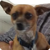 Adopt A Pet :: Simon - Visalia, CA