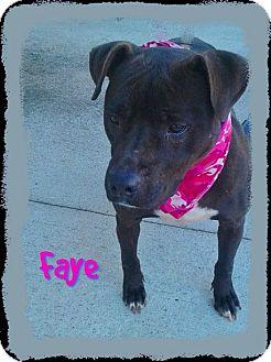Pit Bull Terrier Mix Dog for adoption in Princeton, Kentucky - Faye