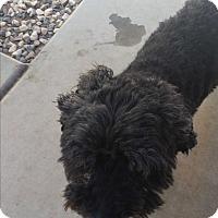 Adopt A Pet :: Shrek - temecula, CA