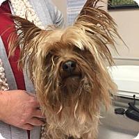 Adopt A Pet :: Rupert - Sacramento, CA