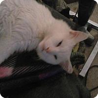 Adopt A Pet :: Midas - Clay, NY