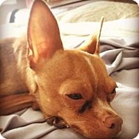 Adopt A Pet :: Friday - Hamilton, ON