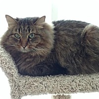 Adopt A Pet :: Herbie - Anchorage, AK