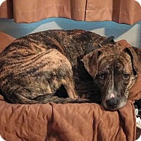 Adopt A Pet :: Prissy - Centreville, VA