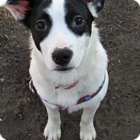 Adopt A Pet :: Daisy - Columbia Heights, MN