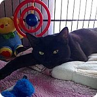 Adopt A Pet :: Jingles - Mount Laurel, NJ