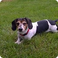 Adopt A Pet :: WINTER, PEPPLES, & DUKE - Portland, OR