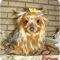 Adopt A Pet :: Sasha - Mooy, AL
