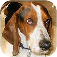 Adopt A Pet :: Clyde - Phoenix, AZ