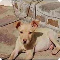 Adopt A Pet :: Ashley - Chula Vista, CA
