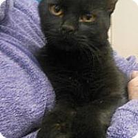 Adopt A Pet :: Jacob - Reston, VA