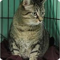 Adopt A Pet :: Taffy - Mission, BC