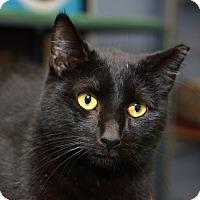 Adopt A Pet :: Checkers - Whitehall, PA