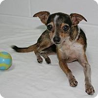 Adopt A Pet :: Rosebud - Lufkin, TX