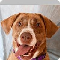Adopt A Pet :: Mattie - Pittsboro, NC