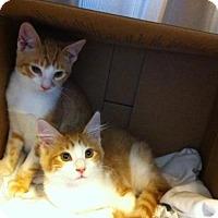 Adopt A Pet :: BB - Watkinsville, GA