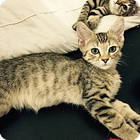 Adopt A Pet :: Garrett - Speonk, NY