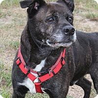 Adopt A Pet :: Huggie - Waldorf, MD